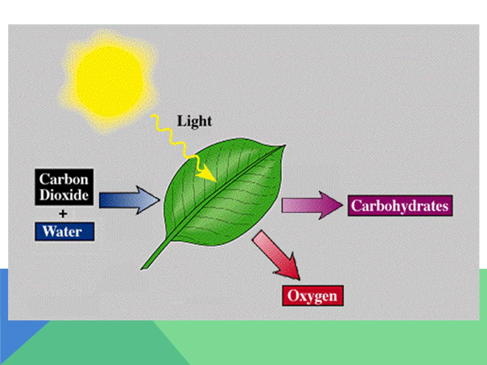 PHOTOSYNTHESIS NOT FUNNY HTTP://WWW.YOUTUBE.COM/WATCH?V=HRGRHTW9S1S HTTP://WWW.YOUTUBE.COM/WATCH?V=HRGRHTW9S1S