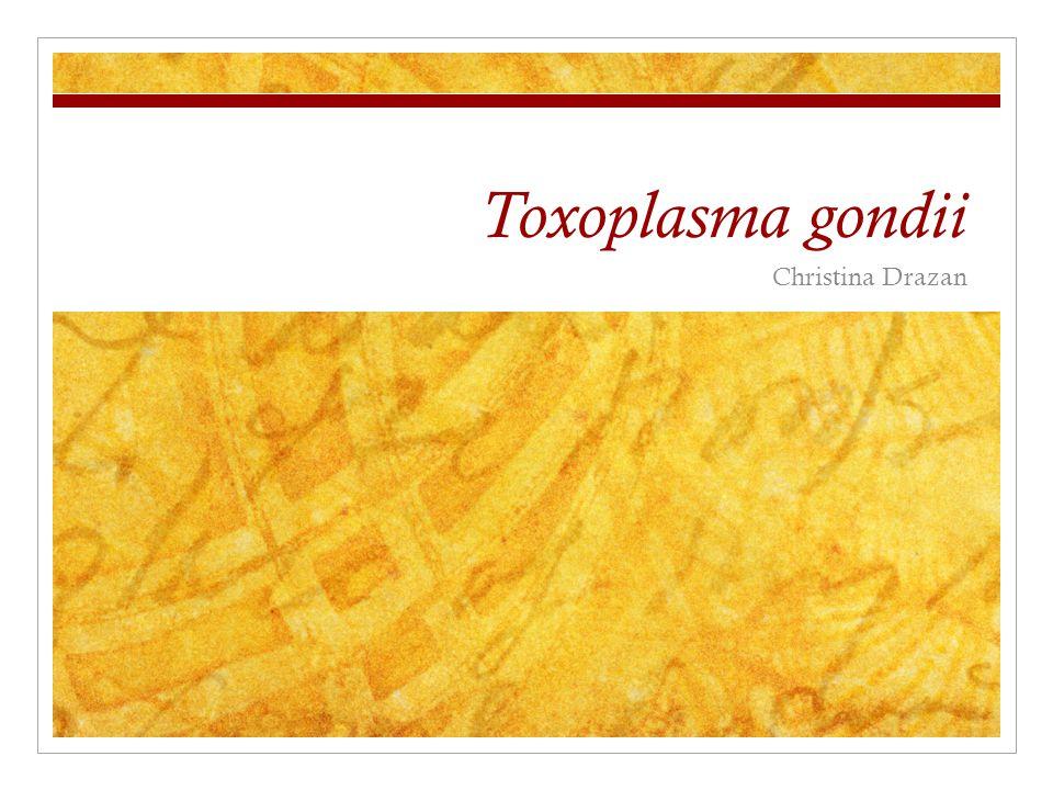 Toxoplasma gondii Christina Drazan
