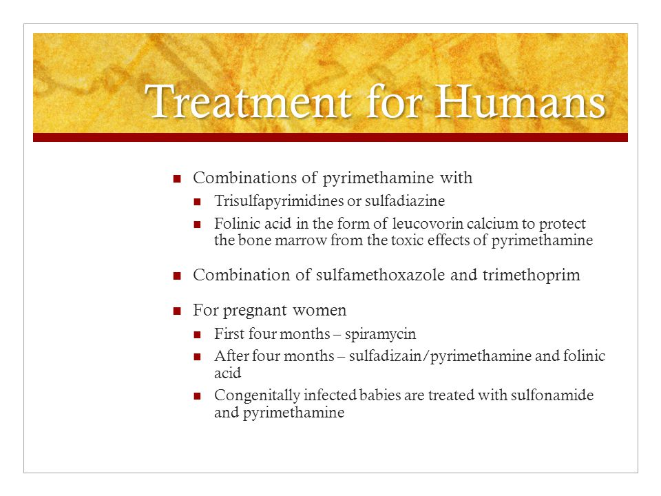 Treatment for Humans Combinations of pyrimethamine with Trisulfapyrimidines or sulfadiazine Folinic acid in the form of leucovorin calcium to protect the bone marrow from the toxic effects of pyrimethamine Combination of sulfamethoxazole and trimethoprim For pregnant women First four months – spiramycin After four months – sulfadizain/pyrimethamine and folinic acid Congenitally infected babies are treated with sulfonamide and pyrimethamine