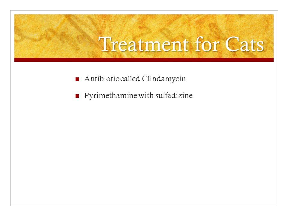Treatment for Cats Antibiotic called Clindamycin Pyrimethamine with sulfadizine