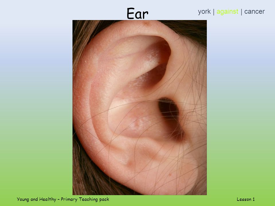 Ear york | against | cancer Young and Healthy – Primary Teaching pack Lesson 1