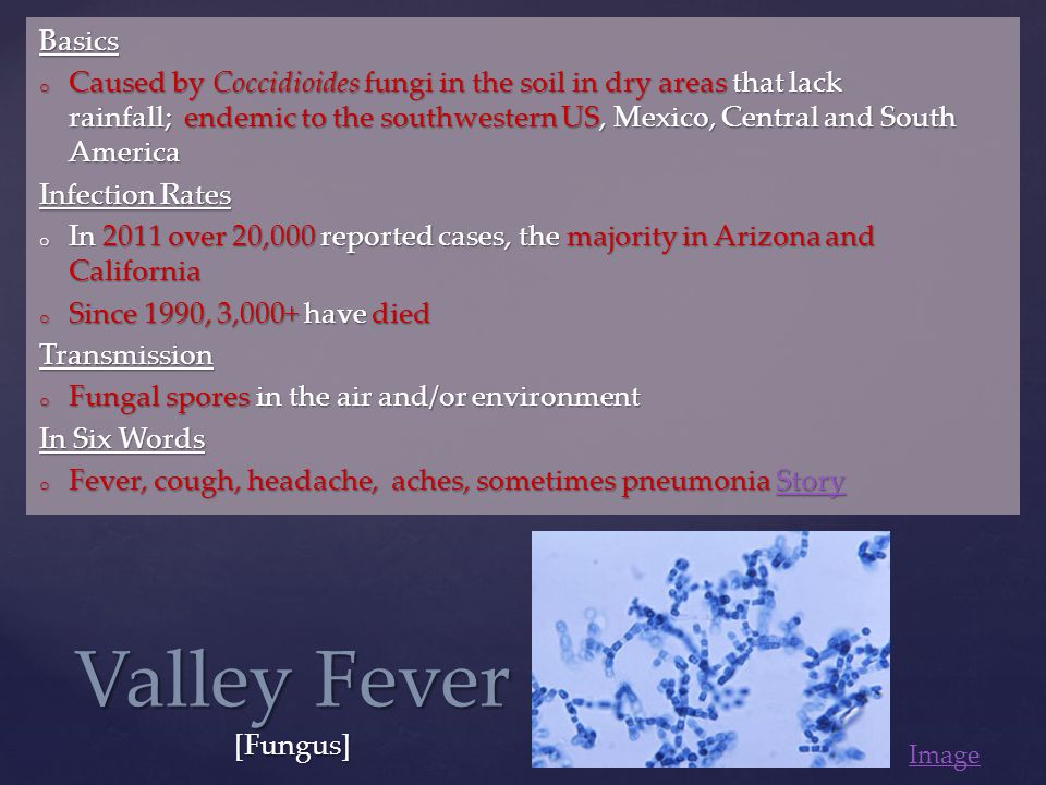 Basics o Caused by Coccidioides fungi in the soil in dry areas that lack rainfall; endemic to the southwestern US, Mexico, Central and South America Infection Rates o In 2011 over 20,000 reported cases, the majority in Arizona and California o Since 1990, 3,000+ have died Transmission o Fungal spores in the air and/or environment In Six Words o Fever, cough, headache, aches, sometimes pneumonia Story Story Valley Fever [Fungus] Image
