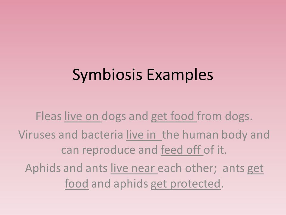 Symbiosis – a relationship in which one organism lives on, near, or inside another and at least one of the organisms benefit.