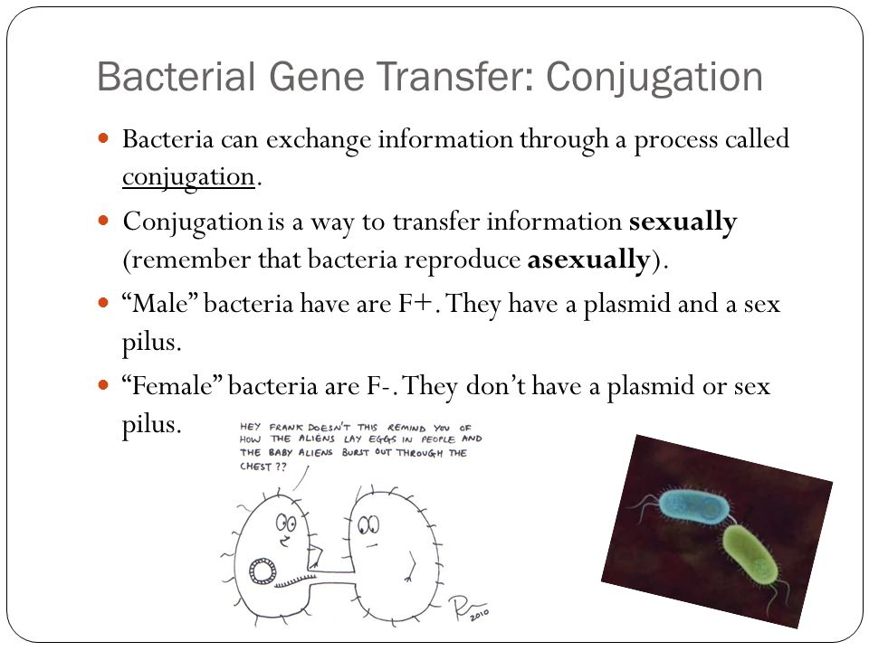 Bacterial Gene Transfer: Conjugation Bacteria can exchange information through a process called conjugation.