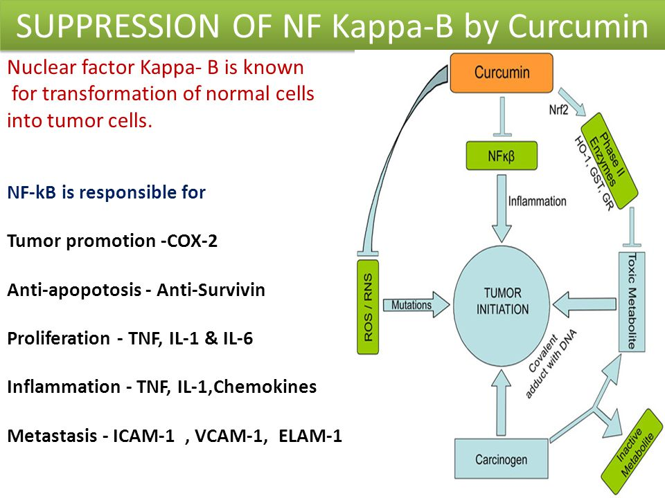 SUPPRESSION OF NF Kappa-B by Curcumin Nuclear factor Kappa- B is known for transformation of normal cells into tumor cells. NF-kB is responsible for T