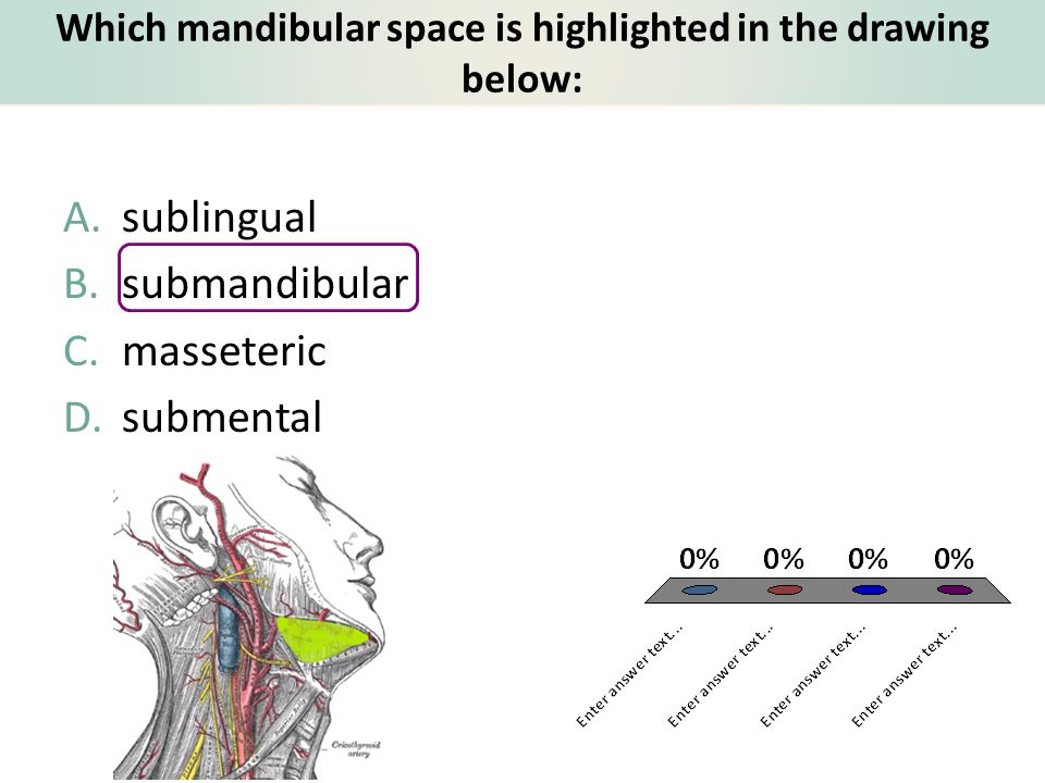 Which mandibular space is highlighted in the drawing below: A.sublingual B.submandibular C.masseteric D.submental