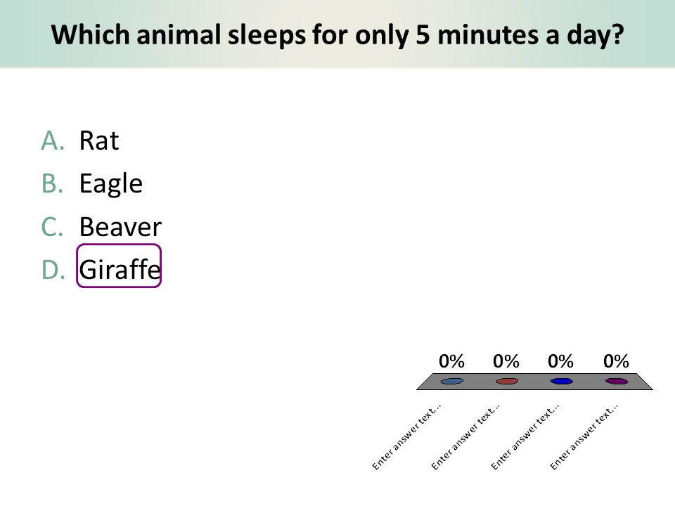 Which animal sleeps for only 5 minutes a day? A.Rat B.Eagle C.Beaver D.Giraffe