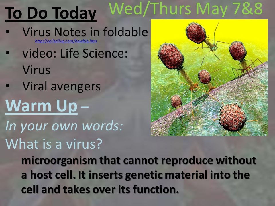 To Do Today Virus Notes in foldable video: Life Science: Virus Viral avengers Warm Up – In your own words: What is a virus.