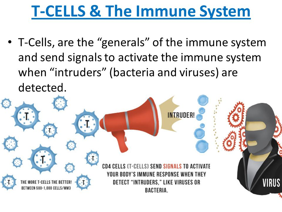 """T-CELLS & The Immune System T-Cells, are the """"generals"""" of the immune system and send signals to activate the immune system when """"intruders"""" (bacteria"""