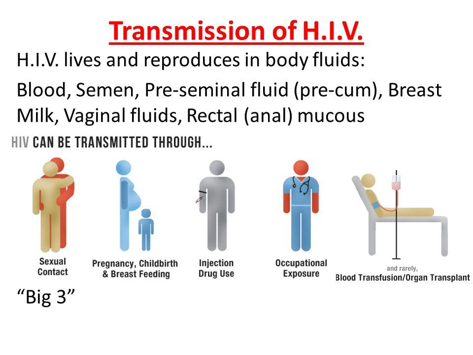 Transmission of H.I.V. H.I.V. lives and reproduces in body fluids: Blood, Semen, Pre-seminal fluid (pre-cum), Breast Milk, Vaginal fluids, Rectal (ana