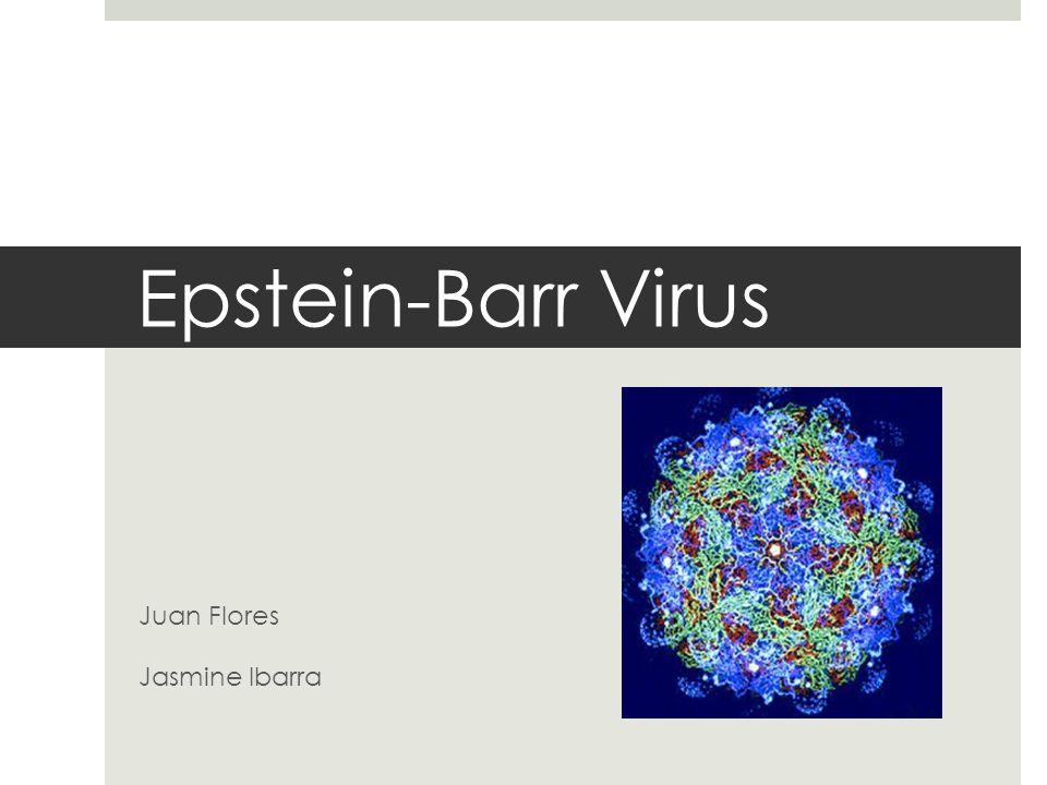 Epstein-Barr Virus Juan Flores Jasmine Ibarra