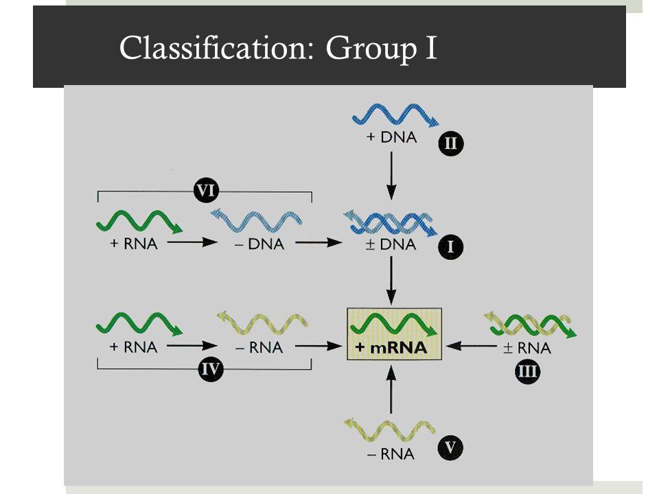 Classification: Group I