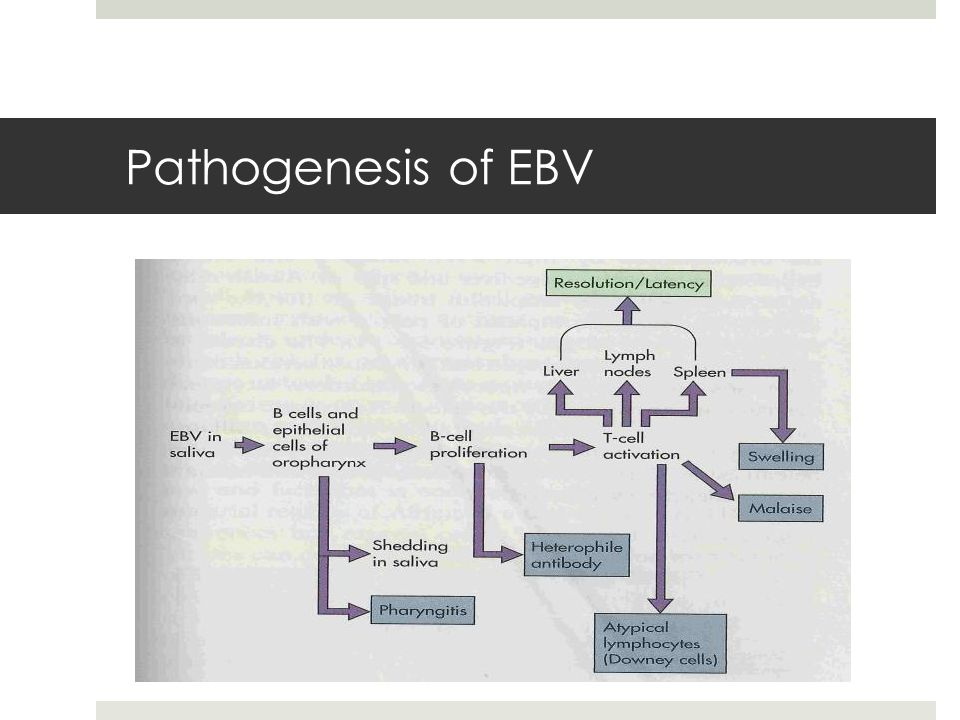 Pathogenesis of EBV