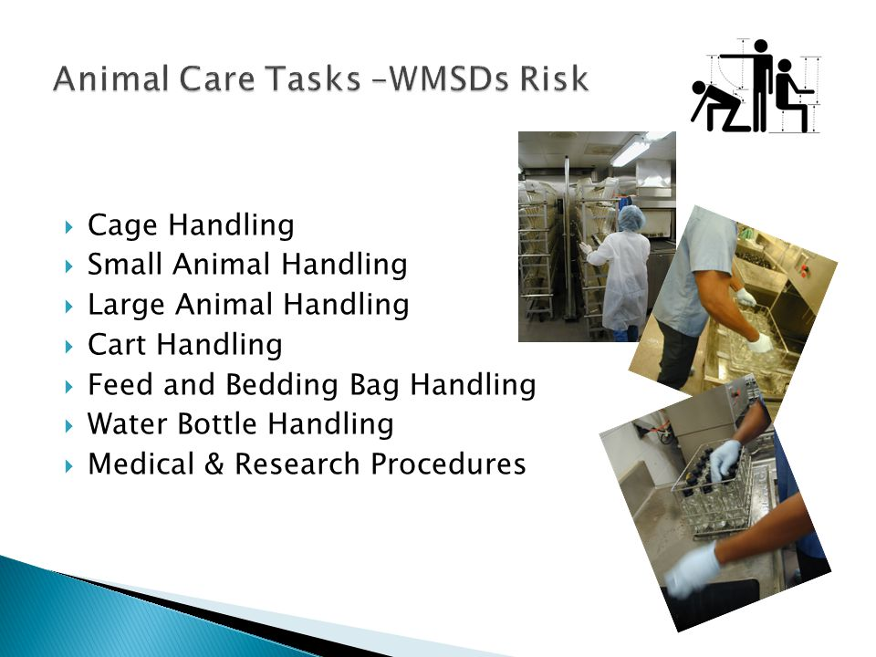  Cage Handling  Small Animal Handling  Large Animal Handling  Cart Handling  Feed and Bedding Bag Handling  Water Bottle Handling  Medical & Research Procedures