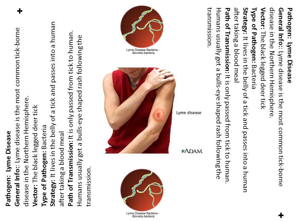 ✚ Pathogen: Lyme Disease General Info:: Lyme disease is the most common tick-borne disease in the Northern Hemisphere.