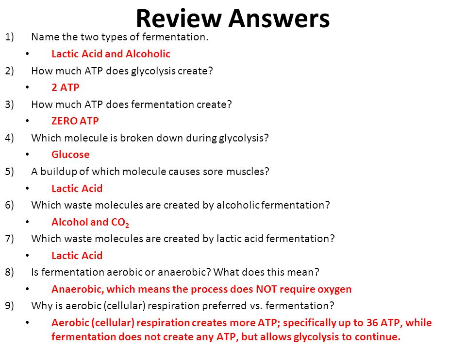 Review 1)Name the two types of fermentation. 2)How much ATP does glycolysis create? 3)How much ATP does fermentation create? 4)Which molecule is broke