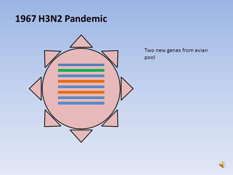 1957 H2N2 PANDEMIC 3 Avian segments 5 Human segments Human H1N1 became extinct at the onset of H2N2 BUT in 1977 it was reintroduced into society from what is believed to be a lab leakage H2N2 subsequently became extinct as well