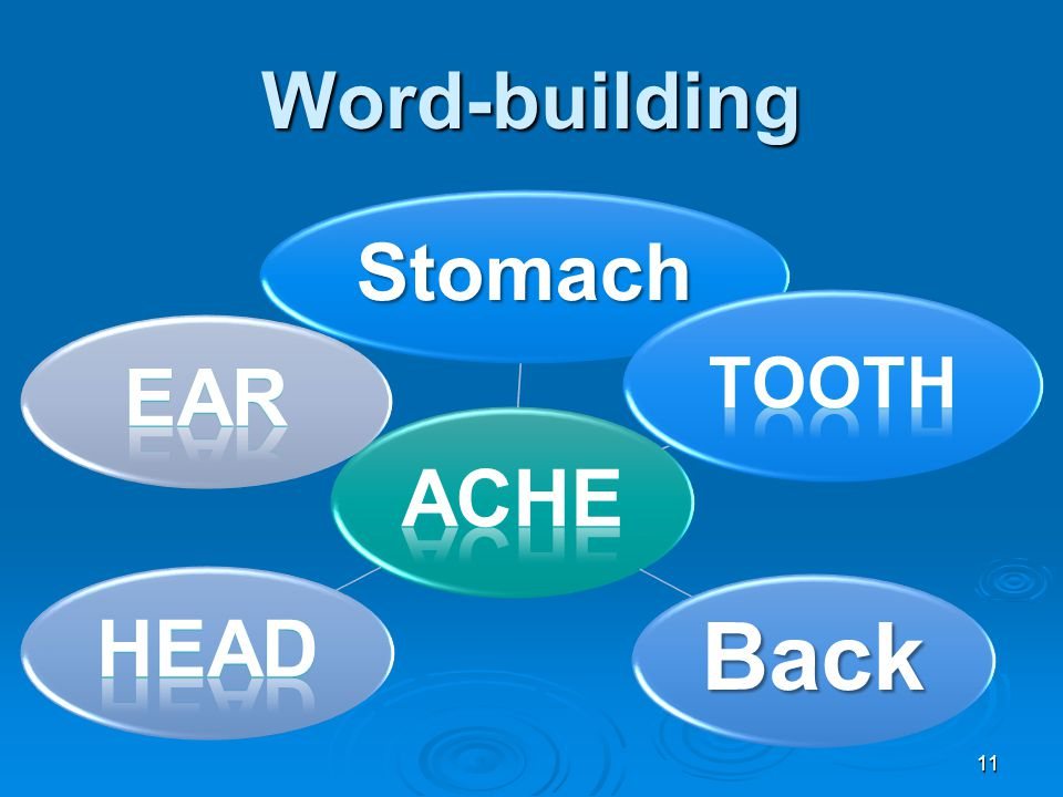Word-building 11 StomachBack