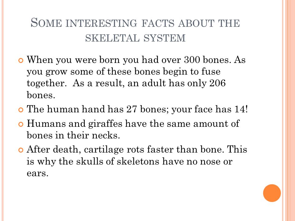 S OME INTERESTING FACTS ABOUT THE SKELETAL SYSTEM When you were born you had over 300 bones. As you grow some of these bones begin to fuse together. A