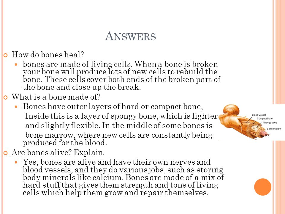 A NSWERS How do bones heal? bones are made of living cells. When a bone is broken your bone will produce lots of new cells to rebuild the bone. These