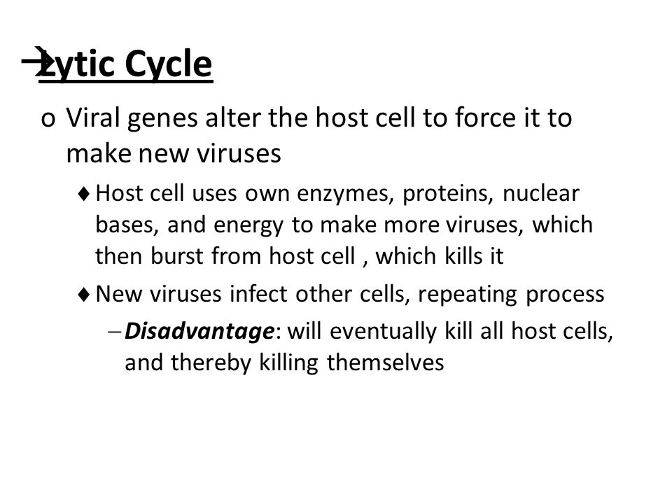  Lytic Cycle oViral genes alter the host cell to force it to make new viruses  Host cell uses own enzymes, proteins, nuclear bases, and energy to make more viruses, which then burst from host cell, which kills it  New viruses infect other cells, repeating process  Disadvantage: will eventually kill all host cells, and thereby killing themselves