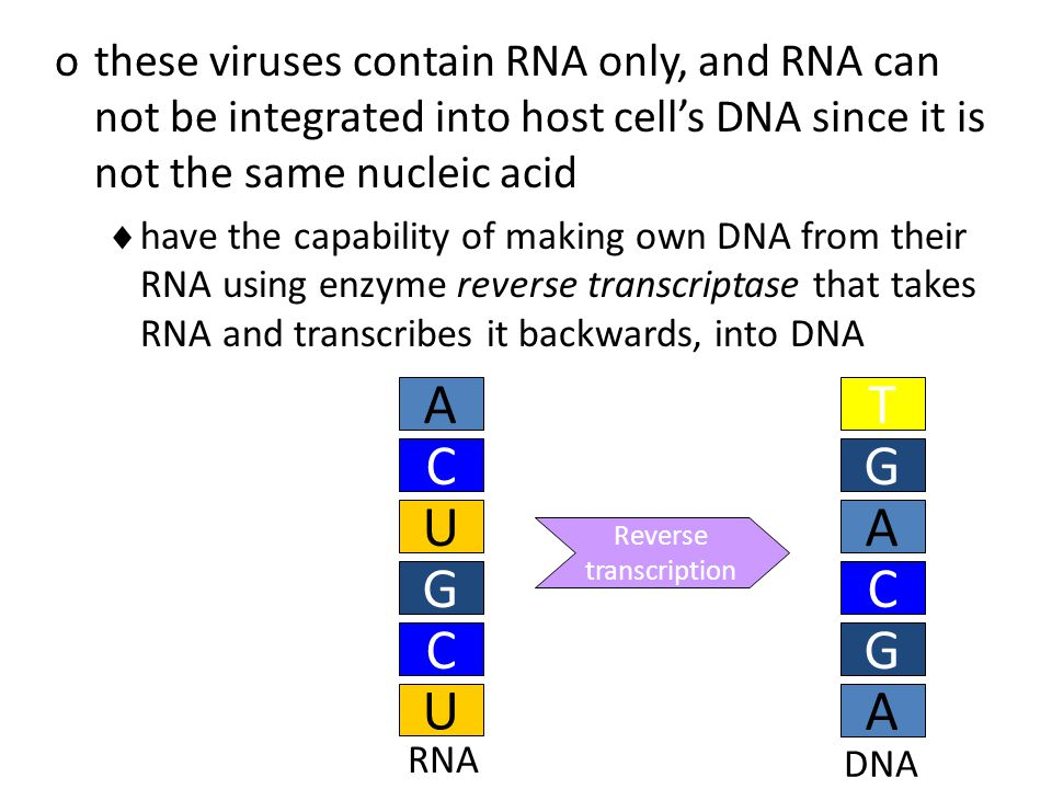 othese viruses contain RNA only, and RNA can not be integrated into host cell's DNA since it is not the same nucleic acid  have the capability of making own DNA from their RNA using enzyme reverse transcriptase that takes RNA and transcribes it backwards, into DNA A C G U C U RNA A G T C G A DNA Reverse transcription