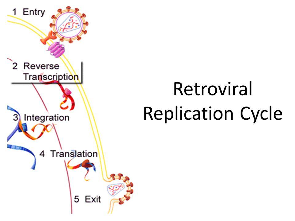 Retroviral Replication Cycle
