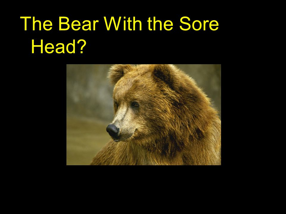 The Bear With the Sore Head?