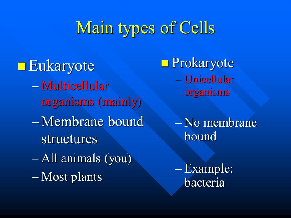 Cells (basic unit of a living organism) Carry out the functions within the system Carry out the functions within the system Nerve, White BC, RBC, muscle, epithelial, etc.