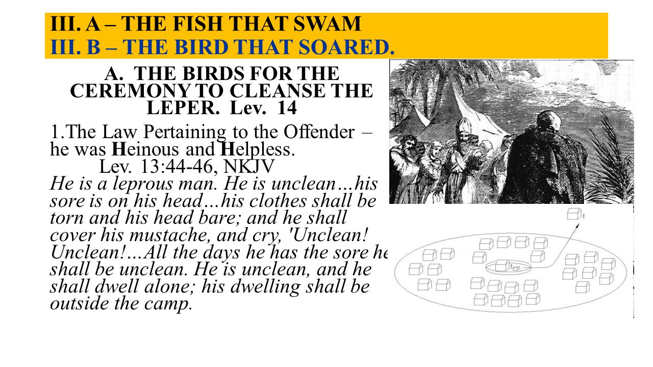 III. A – THE FISH THAT SWAM III. B – THE BIRD THAT SOARED. A. THE BIRDS FOR THE CEREMONY TO CLEANSE THE LEPER. Lev. 14 1.The Law Pertaining to the Off