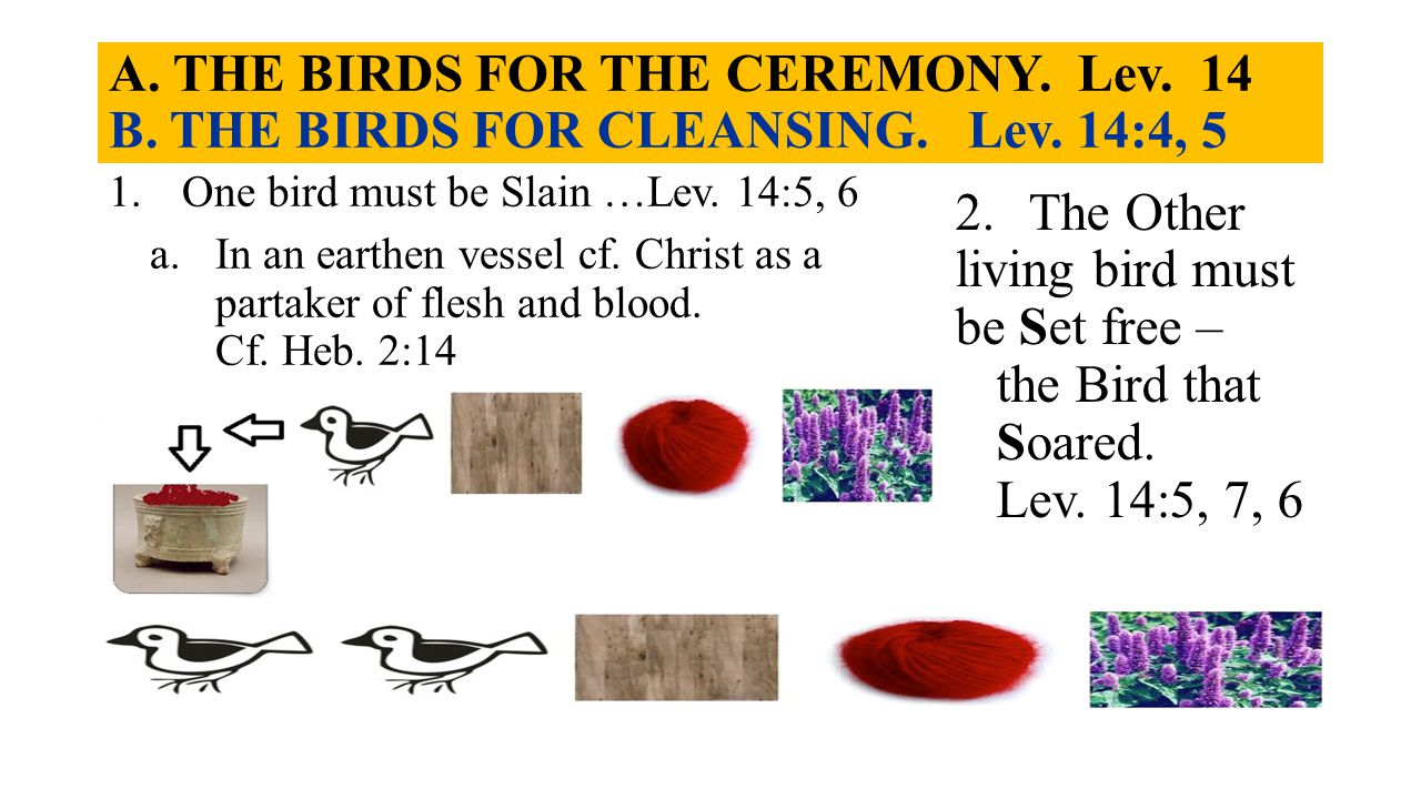 A. THE BIRDS FOR THE CEREMONY. Lev. 14 B. THE BIRDS FOR CLEANSING. Lev. 14:4, 5 1.One bird must be Slain …Lev. 14:5, 6 a.In an earthen vessel cf. Chri