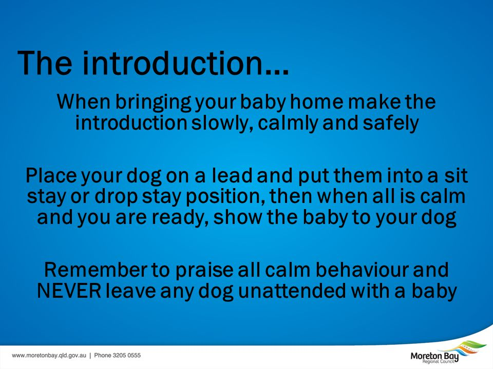 The introduction… When bringing your baby home make the introduction slowly, calmly and safely Place your dog on a lead and put them into a sit stay or drop stay position, then when all is calm and you are ready, show the baby to your dog Remember to praise all calm behaviour and NEVER leave any dog unattended with a baby