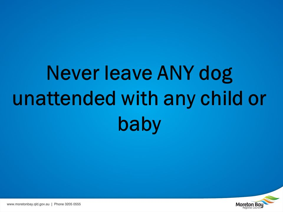 Never leave ANY dog unattended with any child or baby