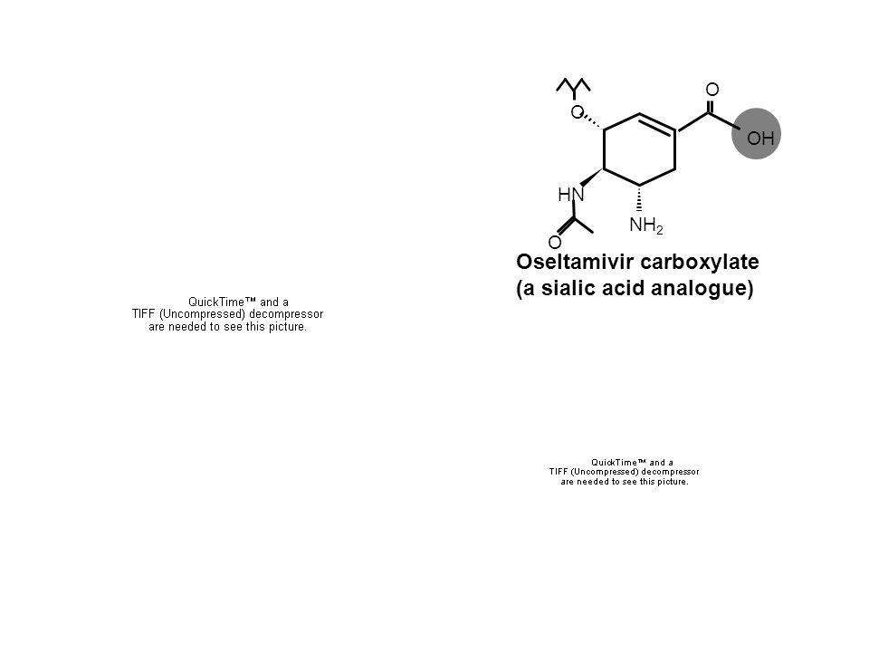 Oseltamivir carboxylate (a sialic acid analogue) O O NH 2 O HN OH