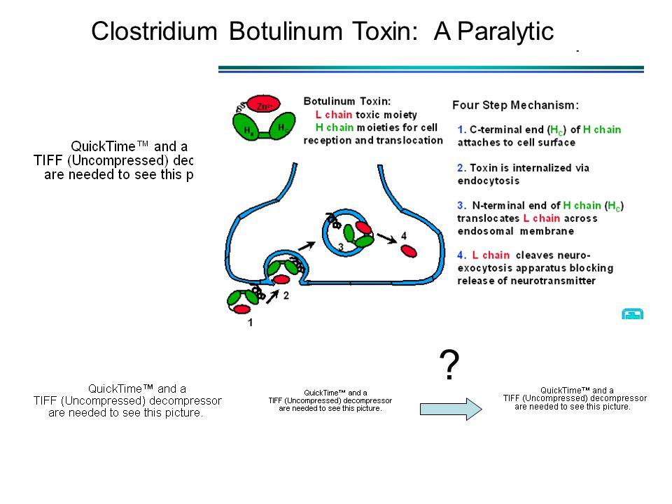? Clostridium Botulinum Toxin: A Paralytic