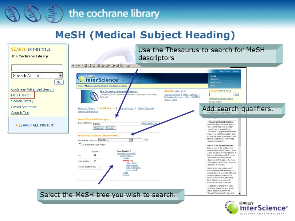 MeSH (Medical Subject Heading) Add search qualifiers.