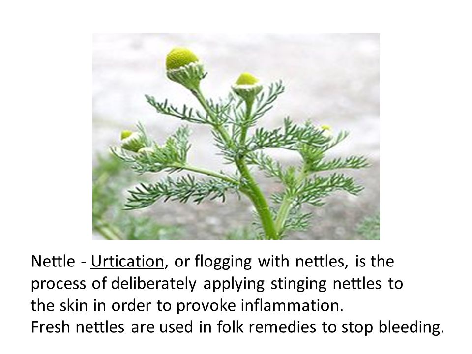 Nettle - Urtication, or flogging with nettles, is the process of deliberately applying stinging nettles to the skin in order to provoke inflammation.