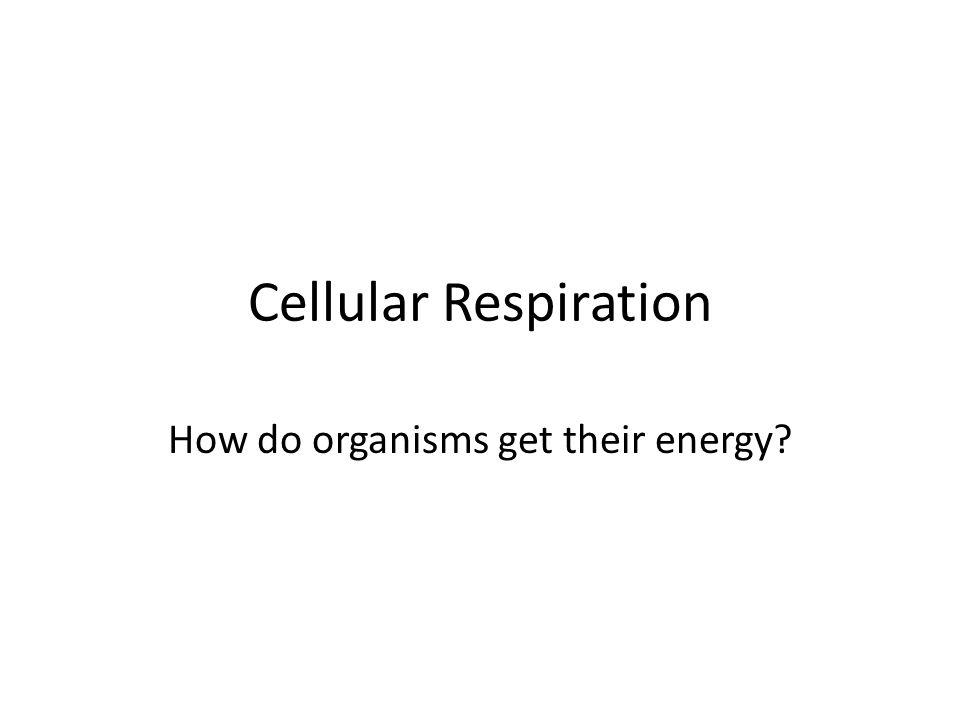 Cellular Respiration How do organisms get their energy?