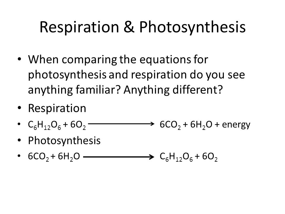 Respiration & Photosynthesis Read the section on comparing photosynthesis and respiration in your cells and heredity textbook.