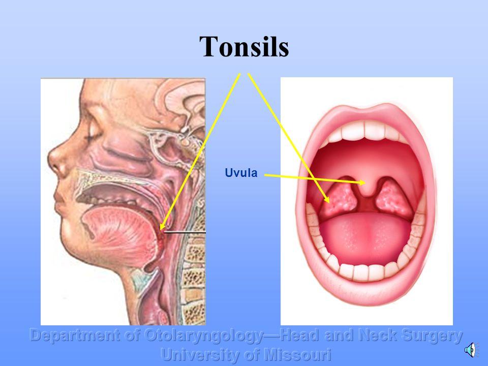 & Tonsil Adenoid Surgery