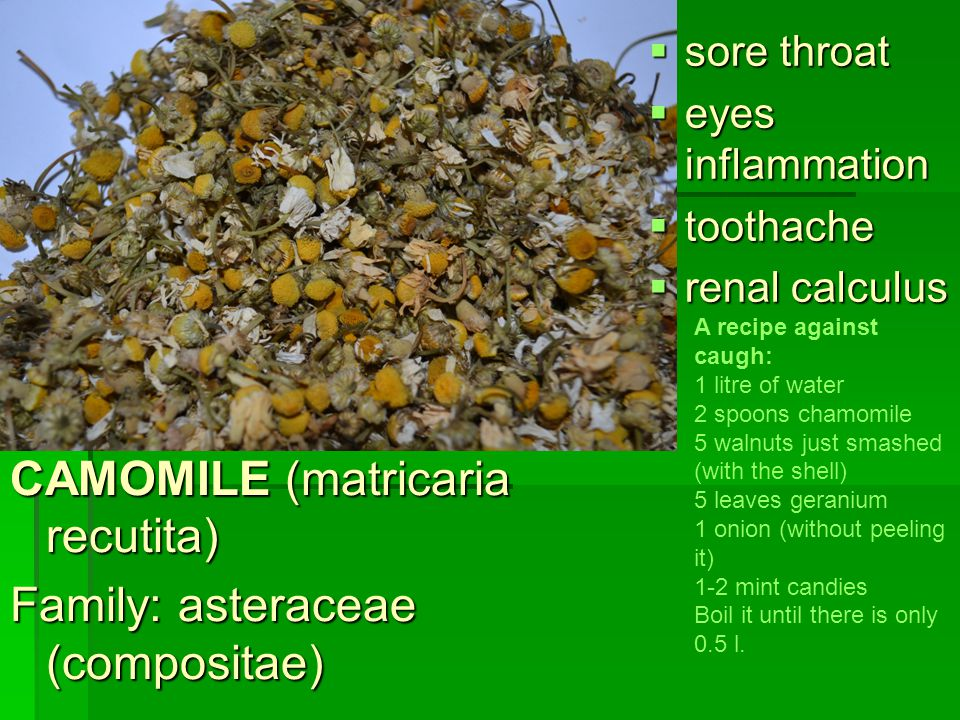 CAMOMILE (matricaria recutita) Family: asteraceae (compositae)  sore throat  eyes inflammation  toothache  renal calculus A recipe against caugh: