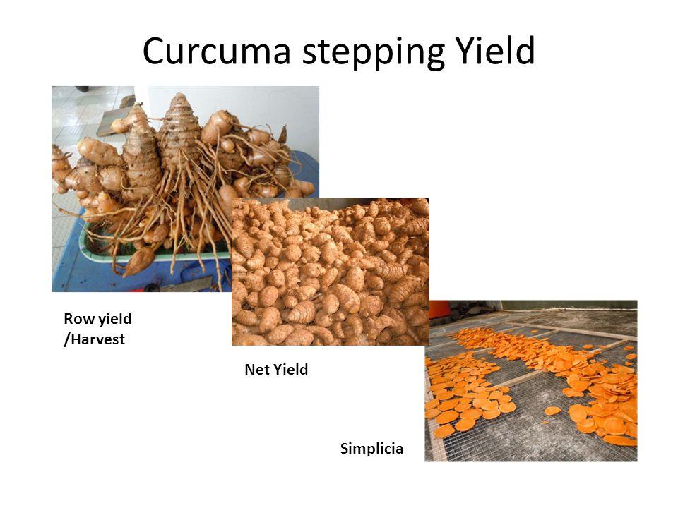 Curcuma stepping Yield Row yield /Harvest Net Yield Simplicia