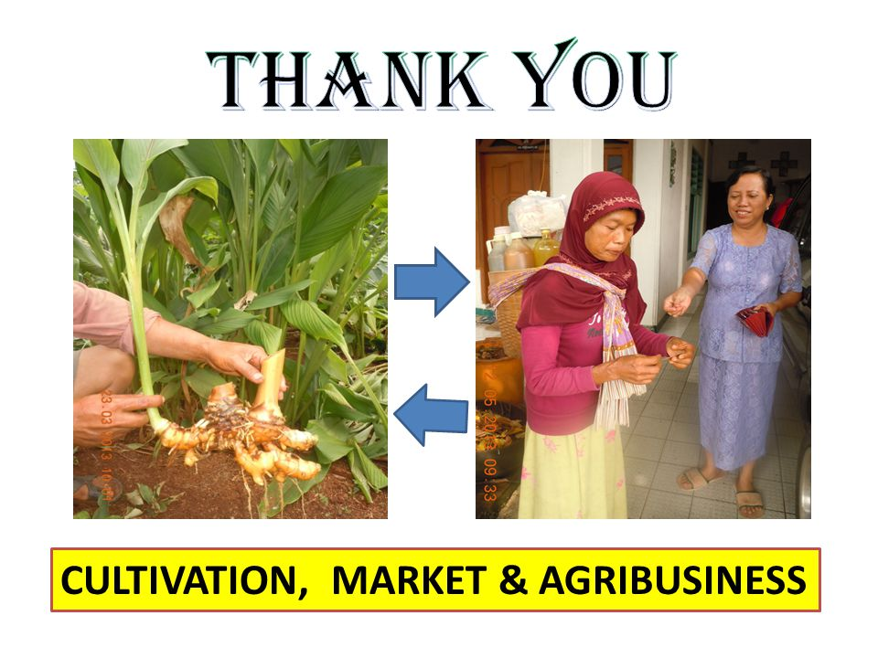CULTIVATION, MARKET & AGRIBUSINESS