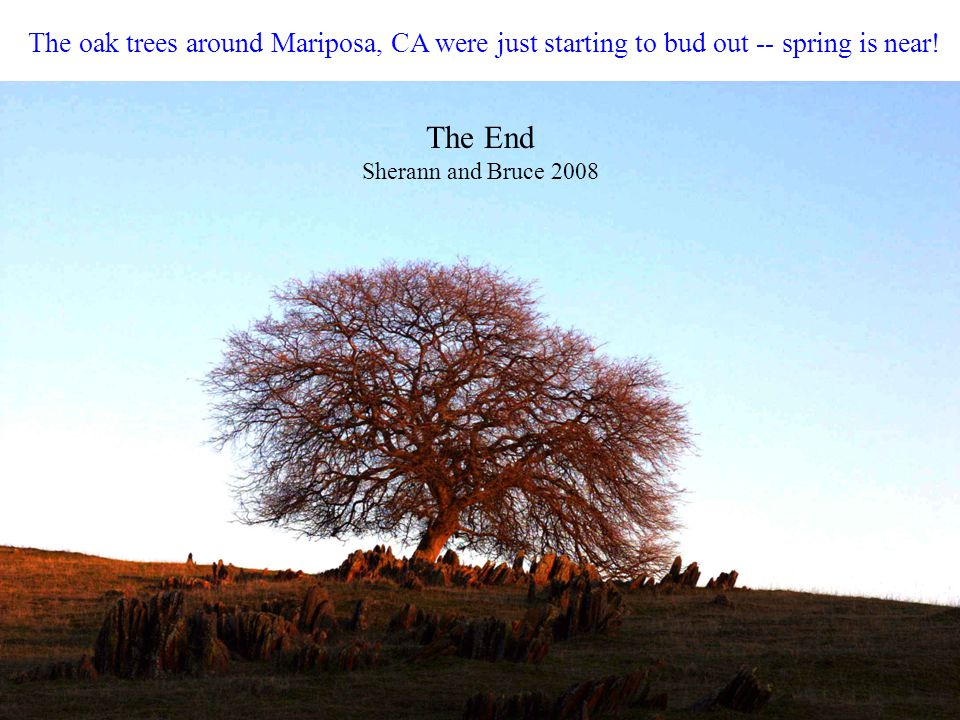 The oak trees around Mariposa, CA were just starting to bud out -- spring is near! The End Sherann and Bruce 2008