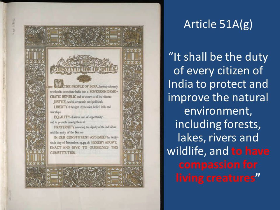 Article 51A(g) It shall be the duty of every citizen of India to protect and improve the natural environment, including forests, lakes, rivers and wildlife, and to have compassion for living creatures