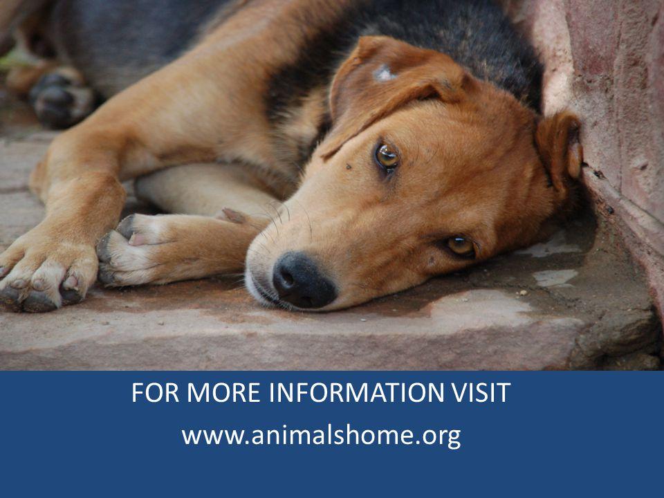 FOR MORE INFORMATION VISIT www.animalshome.org