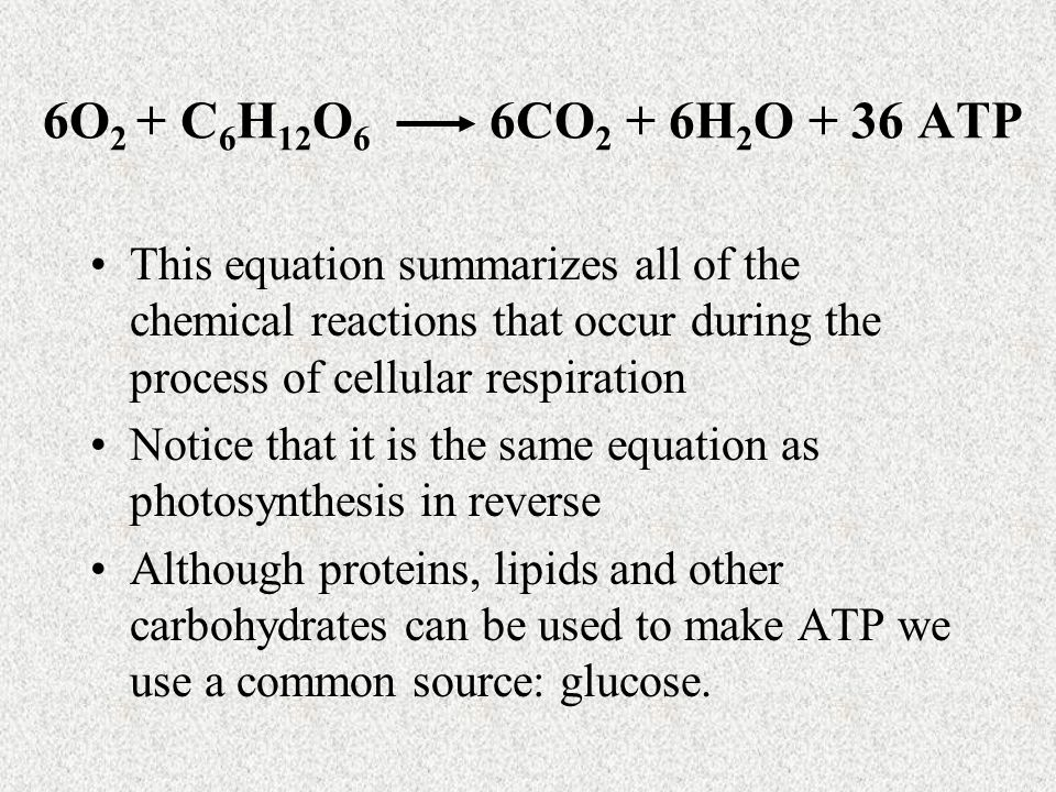 6O 2 + C 6 H 12 O 6 6CO 2 + 6H 2 O + 36 ATP This equation summarizes all of the chemical reactions that occur during the process of cellular respiration Notice that it is the same equation as photosynthesis in reverse Although proteins, lipids and other carbohydrates can be used to make ATP we use a common source: glucose.