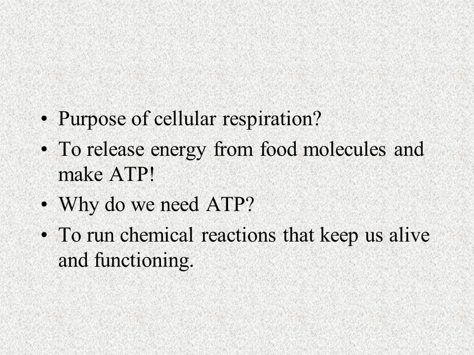 Purpose of cellular respiration. To release energy from food molecules and make ATP.
