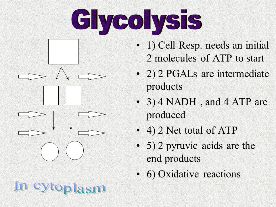 1) Cell Resp. needs an initial 2 molecules of ATP to start 2) 2 PGALs are intermediate products 3) 4 NADH, and 4 ATP are produced 4) 2 Net total of AT