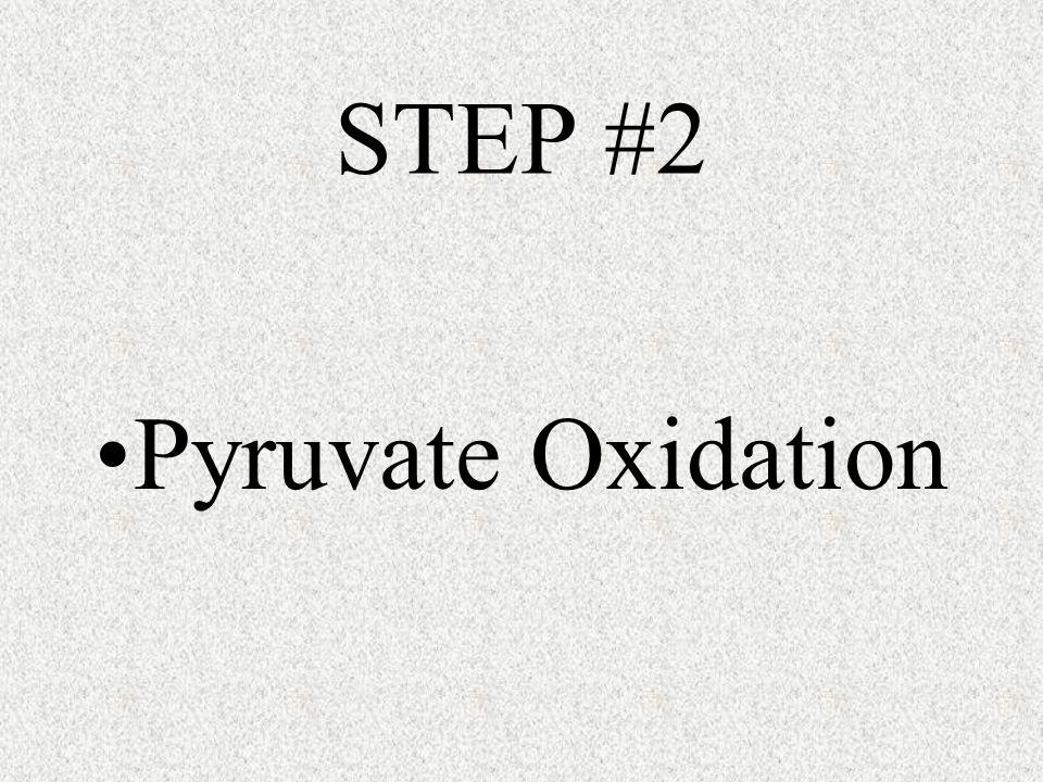 STEP #2 Pyruvate Oxidation